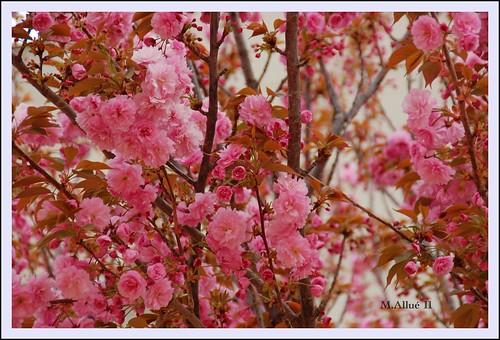 Primavera (2) by Miguel Allué Aguilar