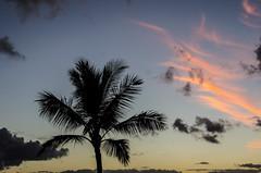 Palm (wrgenec) Tags: sheraton hawaii kauai outdoor night sky sunset evening