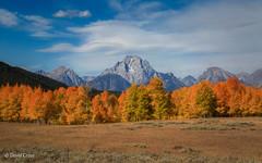 Scintillating Autumn (buffdawgus) Tags: autumn canon5dmarkiii canonef24105mmf4lisusm fall grandtetonnationalpark landscape lightroom5 mtmoran tetons topazsw wyoming