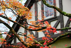 Victorian Autumn (gfacegrace) Tags: flower flowers garden gardenphotography love nature amazingnature beautiful pretty flowerphotography tuparegardens naturephotography colourful amazing botanical gardens artistic canon tree growth spring purple door fantasy old roof magical cottage victorian victorianhouse aframe architecture autumn mapleleaf leaves leaf red orange color fire maple mapletree