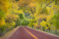 "Autumn Road Drive (IronRodArt - Royce Bair (""Star Shooter"")) Tags: road park travel autumn trees vacation orange usa southwest color fall nature beautiful leaves yellow america forest season landscape utah woods highway colorful natural grove outdoor scenic large peaceful canyon foliage national cottonwood trunk grotto dreamy zion wilderness canopy graceful lanecurve"