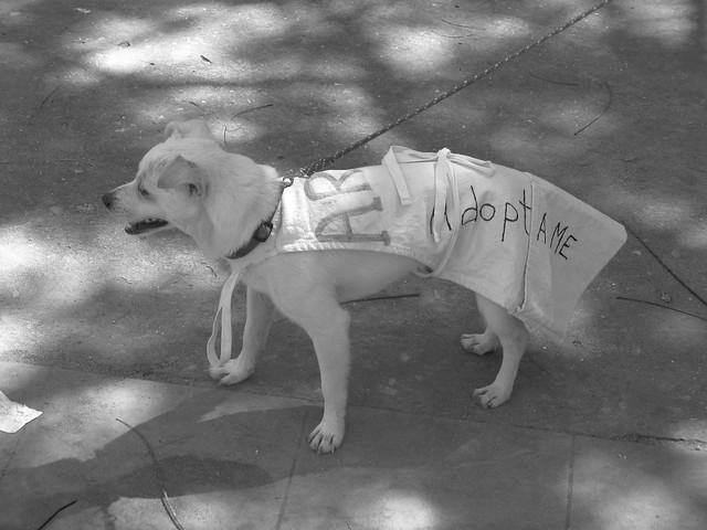Adopta Me!