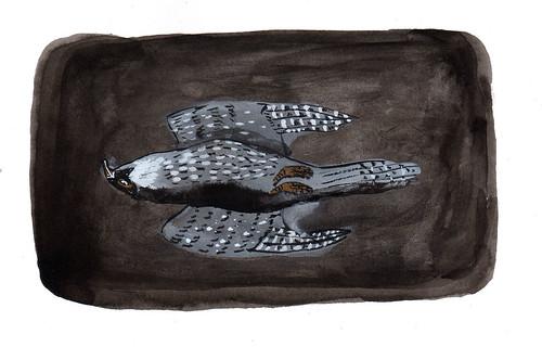 hawk fallen
