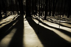 Picture 11 (wobtotone) Tags: trees light shadow night dark mysterious