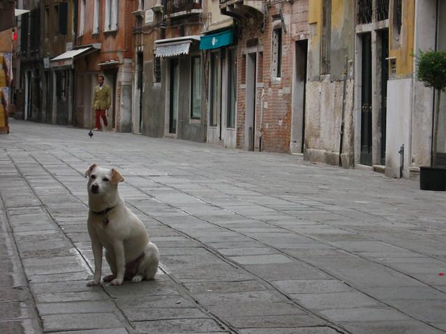 ヴェネツィアの街角と犬のフリー写真素材