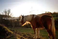 Horse at sunset (Jerome Pouysegu) Tags: voyage trip travel blue trees winter sunset wallpaper vacation portrait sky horse sun france green art nature grass animal canon landscape cheval photography eos 50mm vacances soleil photo europe photographie hiver coucher sigma bleu ciel arbres land jerome 5d sur wallpapers toulouse paysage unlimited crepuscule fond champ herbe ecran photographe lande hautegaronne marliac lezat leze gaillactoulza stybars pouysegu massabrac stquirc