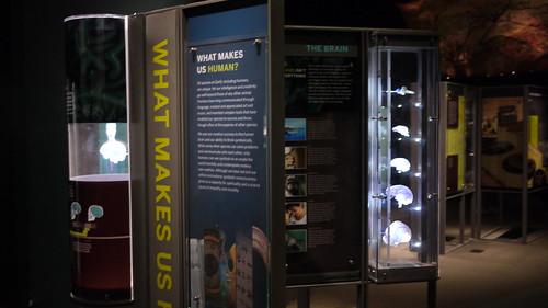 Hall of Human Origins Amnh