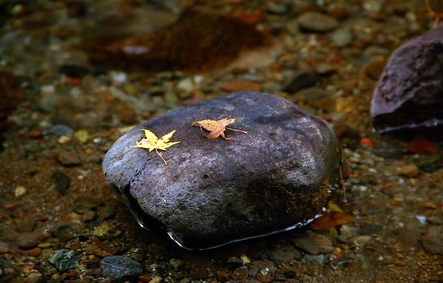 石の上のもみじのフリー写真素材