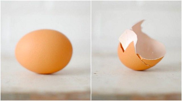 the egg.