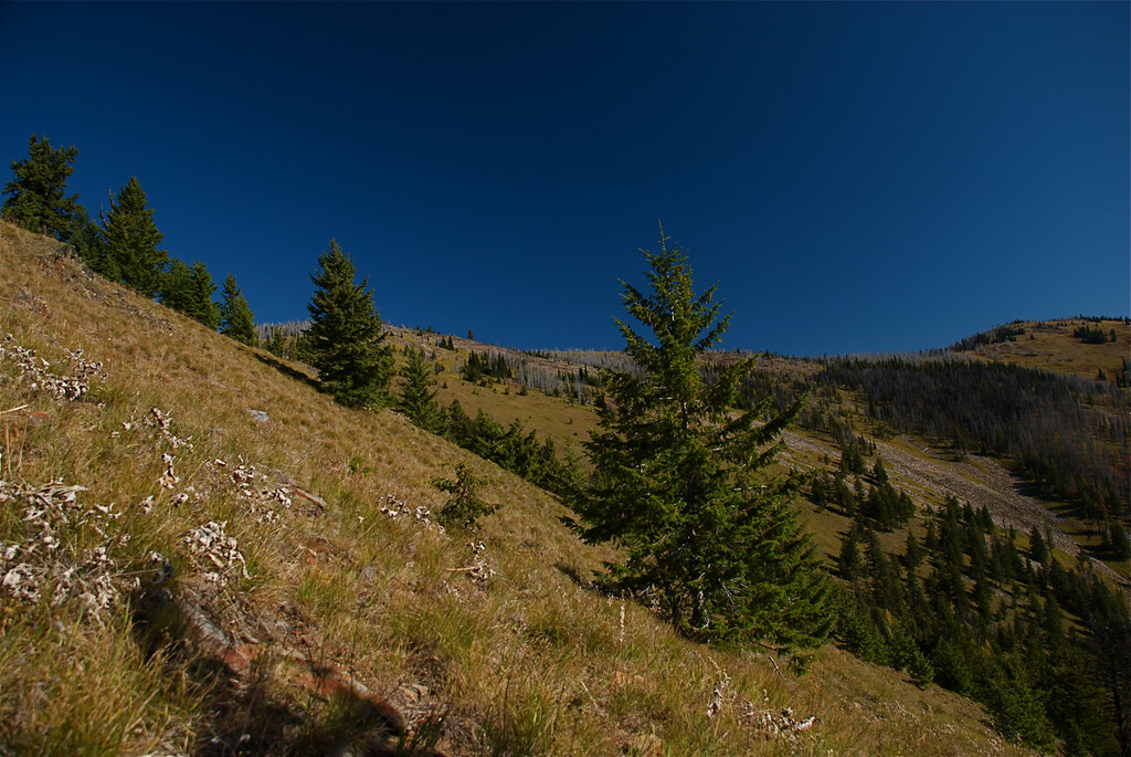 Middle part of trail to Burnt Fork Pinnacle