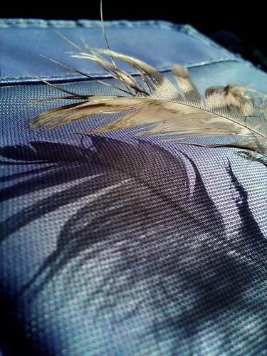 OWL FEATHER 1-IMG01801-20110218-1034 AUTO