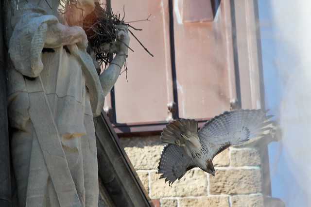 Norman exits the nest