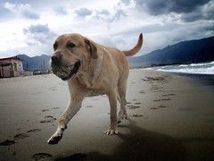 My space (dangeri.) Tags: beach loving fun labrador play buddy dee doc gettyimages somuchfun musetto thelittledoglaughed heismylove doggielife miocucciolo heismyangel gettyimagescontributor magicunicornverybest ourdailylife myyellowlabrador