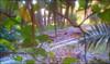 C360_2011-02-04 16-52-54 (MagicPAD - الكعبي) Tags: uae الإمارات الجزيرة الظاهر ناصر الكعبي الخطوة مصح محضة