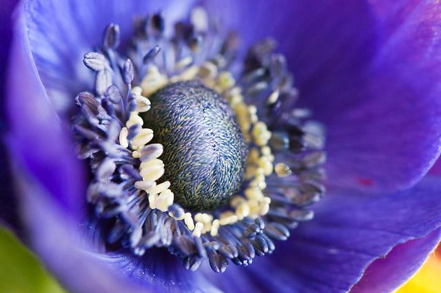 Macro : fleur violette