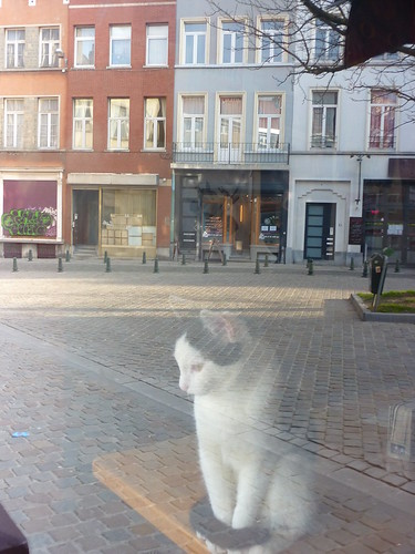 Cat at place de Londres, Brussels