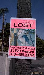 Lost pet rewards: def more lucrative in Studio City than Oakland.