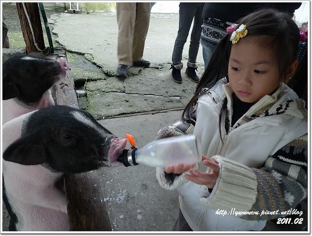 宜農牧羊場 (7)