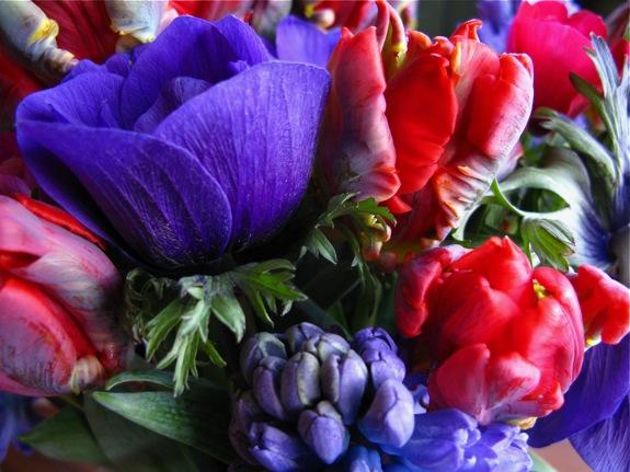 tulip hyacinth anemone flowers 003