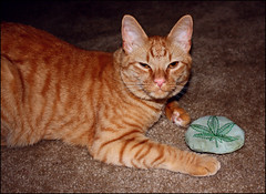 (K. Sawyer Photography) Tags: cat toy leaf weed play tabby 420 catnip marijuana cannabis potleaf
