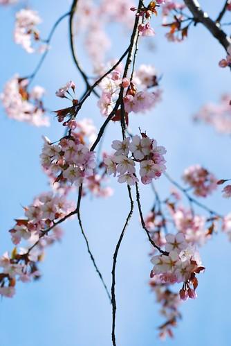 Хрупкая красота Японии DSC_0142