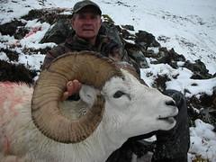 D. Mace-Dall Sheep