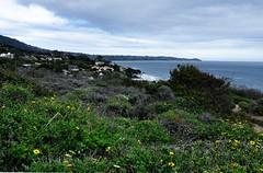 el matador beach, malibu (Rachel Rampleman) Tags: california malibu elmatador paradisecove rachelrampleman