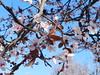 Primavera IV - Spring IV (NIKOZAR (Nicola Zaratta)) Tags: flowers italy primavera spring nikon italia coolpix fiori puglia taranto p500 nikoncoolpix nikonp500 nikoncoolpixp500 coolpixp500 nkoncoolpix