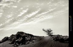 Monologues    (Munirah Ibrahim) Tags: sky white black tree photo desert picture pic wb  monologues