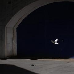 Wings (Che-burashka) Tags: light bird london hope flying pigeon waterloo minimalistic londonist suttonwalk canonef28mmf18usm