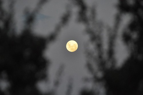 "The ""SuperMoon"" through trees at Cardinia Reservoir"