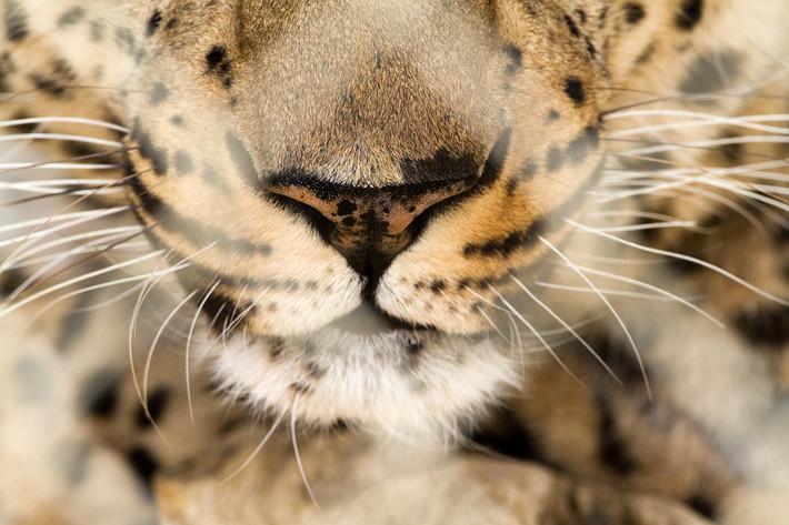 031711_bigCat09_jaguar