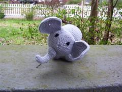 Curious Little Elephant