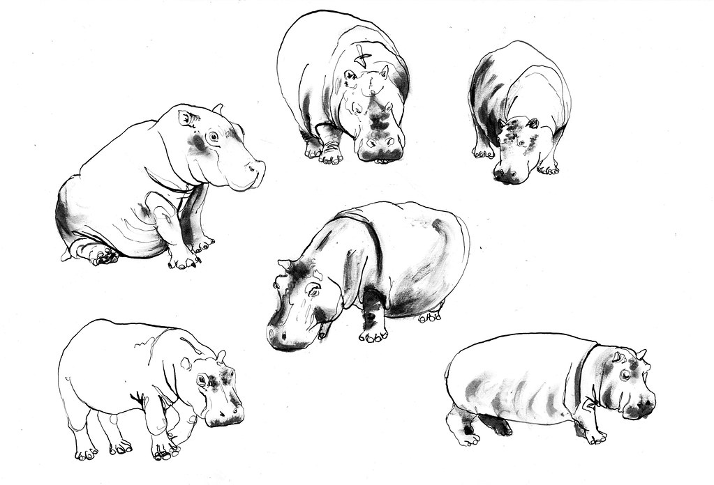 Line Art Hippo : The world s best photos of hippo and sketch flickr hive mind