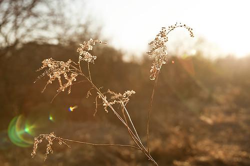 Light Chasing