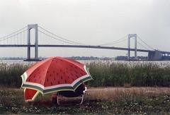 Throgs Neck Bridge And Two Watermelon Umbrellas; New York, New York (hogophotoNY) Tags: nyc bridge ny newyork film grass umbrella watermelon queens filmcamera quirky nybridge forttotten throgsneck queensny filmphotography throgsneckbridge nycbridge queensnewyork filmphoto newyorkbridge bridgespan newyorkusa hogo filmphotograph newyorkus hogophoto