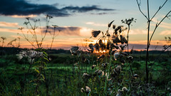 Demidovo (e.glasov) Tags: russia russiansoul moscowregion fields plant landscape sunset sky colourful dusk