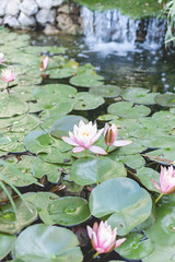 waterlilies ([o] suze q) Tags: water waterlilies pink monet lilypads lilypond gruene gruenerivergrill texas hillcountry photography canon canonrebelt1i osuzeqphotography crpessuzetteacamera