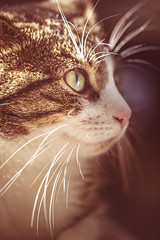 el_Gato_4 (rine_kd) Tags: cat katze fur furry soft red light rosa close cute canon canoneos600d canon100mmacro28l whiskers