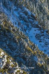 Harry_31000,,,,,,,,,,,,,,,,,,Winter,Snow,Hehuan Mountain,Taroko National Park,National Park (HarryTaiwan) Tags:                  winter snow hehuanmountain tarokonationalpark nationalpark     harryhuang   taiwan nikon d800 hgf78354ms35hinetnet adobergb  nantou mountain
