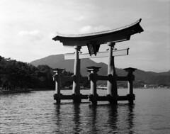 Itsukushima Torii (ccdoh1) Tags: blackandwhite 120 film japan mediumformat island gate shrine floating unesco miyajima plus hp5 6x7 smc torii ilford worldheritage itsukushima pentax67 pushedto1600 165mmf28 r09oneshot