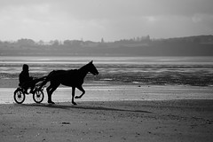 Cheval sur la plage (Rgis (R208)) Tags: horse mer beach cheval sable bretagne britanny plage trot saintbrieuc sulki