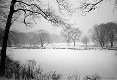 Snow over Turtle Pond (CVerwaal) Tags: nyc newyorkcity winter snow newyork analog centralpark infinity olympus ishootfilm oldschool turtlepond olympusinfinityaf1 fuji800press