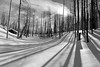 Frozen Forest (Dan Sherman) Tags: winter blackandwhite bw snow oregon forest forests snowscape snowylandscape winterscape winterlandscape winterscene santiampass winterscapes snowscapes dansherman pacificnorthwestlandscape oregonforest oregonsnow pacificnorthwestphotography oregonwoods oregonforests pacificnorthwestforests winterinoregon pacificnorthwestwinter pacificnorthwestforest danielsherman danshermanphotography danshermanphotographycom danielshermanphotography
