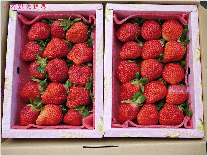 甜柿先生-草莓 (7).JPG