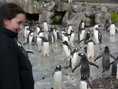 Bryony in the Penguin enclosier. (compassalba) Tags: zoo penguins rocks edinburgh feeding cage keeper edinburghzoo spratts gentoopenguin rockhopperpenguinkingpenguin edinburghzoopenguinenclosure