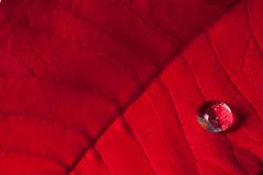Rojo (Janelka_) Tags: macro hoja canon eos rojo agua 100mm gota pascuero nervios nostrobistinfo 5dmarkii removedfromstrobistpool seerule2 100mmmacro28isusm