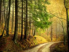 Camaldoli PatH (David Butali) Tags: trees winter italy texture rural forest italia path country campagna tuscany toscana camaldoli arezzo landascape naturepoetry
