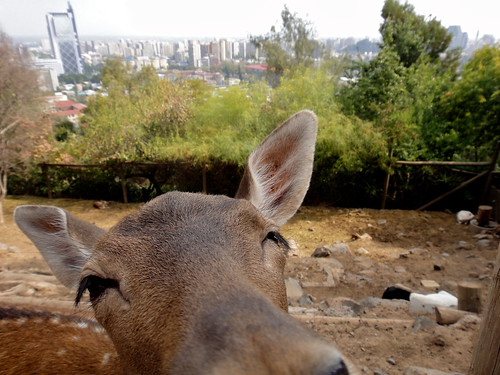 Hello friend in Santiago