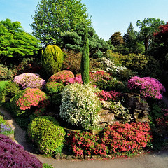 Colorful Rock Garden at Leonardslee Gardens, West Sussex, UK | Flowering Kurume azaleas in May (12 of 14)